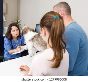 Female veterinarian examining puppy in clinic in presence of worried man and preteen girl