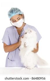 female veterinary taking care of beautiful angora white cat