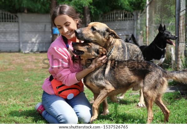 Femme bénévole avec des chiens sans abri dans un refuge pour animaux à l'extérieur