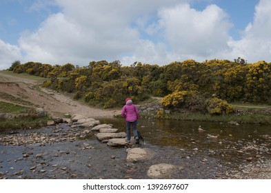 Female Walker with her Black Schnoodle Dog Crossing the River Lyd on Stepping Stones within Dartmoor National Park in Rural Devon, England, UK