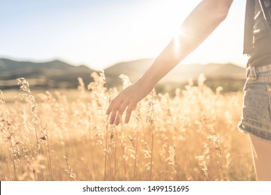Female walking on open field at sunset softly brushing her hand over tall grass. Feeling at peace in nature concept.