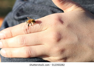 Female Worker Honey Bee Crawling On Girls Hand On A Farm In The Mountains Of South West Virginia