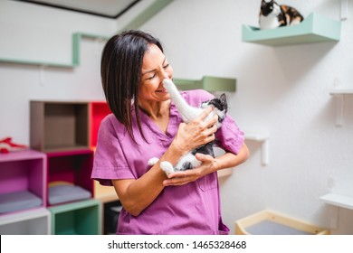 Female worker working in animal shelter and pension for cats.