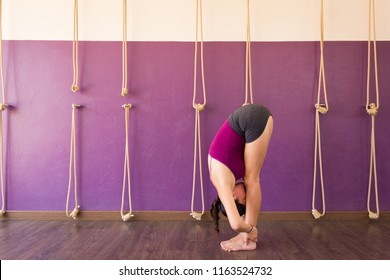 Female yogi in uttanasana on purple studio. Young woman on standing forward bend pose with calisthenics ropes on wall. Flexibility, stretching concepts