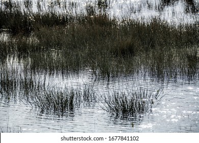 Fen Poster background with dark contrast of fen grasses against the flood