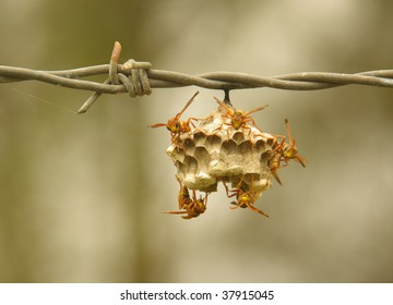 Fence with wasps´nest