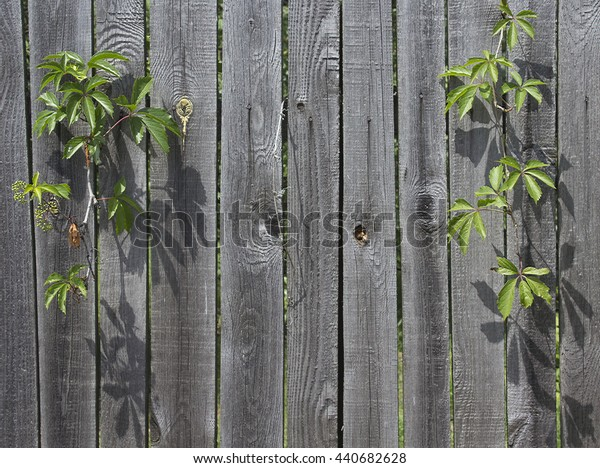 A fence of boards in the vine