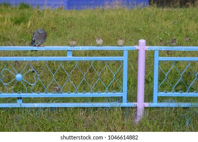 Fence in the city street. Summer and autumn background