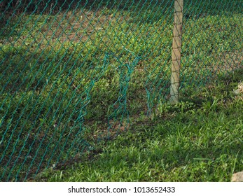 The fence is damaged by human beings who are vandalism