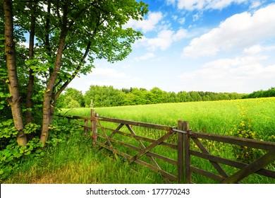 Fence in the green field under blue sky