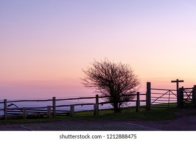 Fence and hawthorn in silhouette against dawn sky