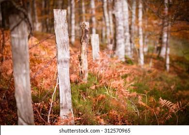 fence near Irabia damp