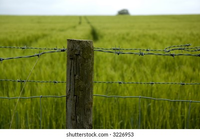 Fence post by green field of corn