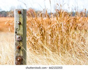 fence post in field of golden prairie grass