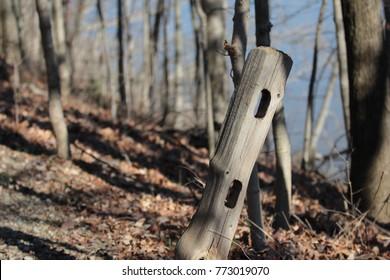 fence post on path