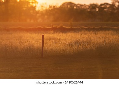 Fence post in tall grass in backlight of evening sun in spring.