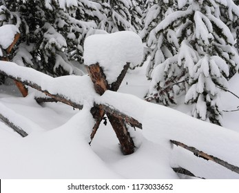 Fence posts in deep snow - Yellowstone National Park, USA