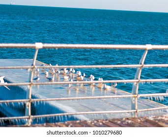 fence, seagulls, winter, winter sea, winter ocean, ice, sea birds, many birds