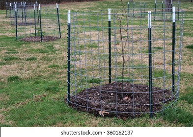 Fence surrounds young seedling Chestnut Trees. The American Chestnut Trees resistant to blight were planted at Abraham Lincoln Birthplace National Historical Park.