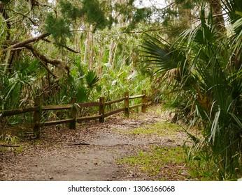 Fence way Jungel