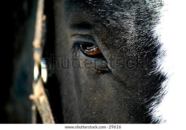 Fenced: close up of reflection of fence in horses eye