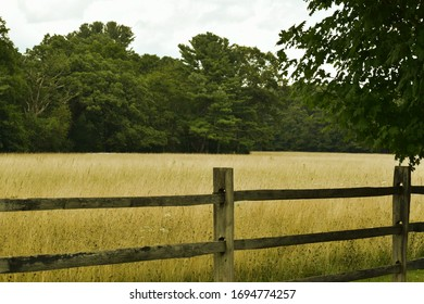 Fenced in field bordered by a forest