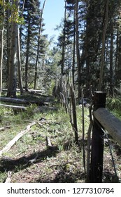 Fenceline through a forest of pine