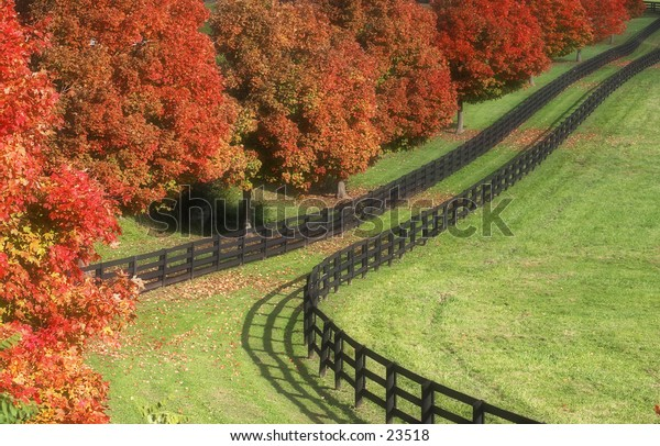 Fences in the fall.