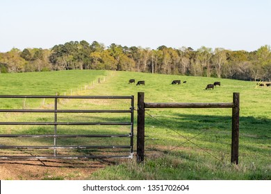 Fencing H-brace and gate on a pasture with cattle grazing in the background out-of-focus.