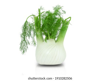 Fennel Bulb. Single fresh fennel bulb with leaves on white background