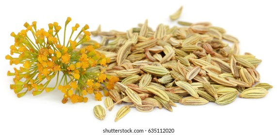 Fennel seeds with flowers over white background