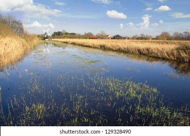 The fens in East Anglia are a marshy region, artifically drained and transformed into arable farming areas, with production of grains, vegetables and some cash crops such as rapeseed or canola.