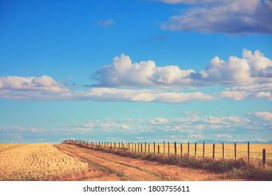 Fense in autumn fields in sunny day