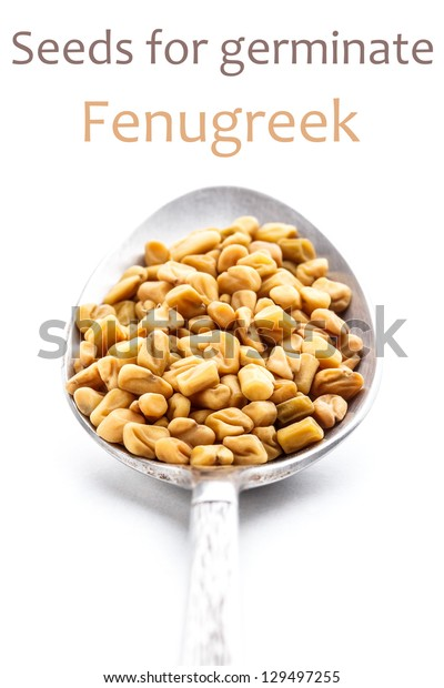 Fenugreek seeds for germination on white background