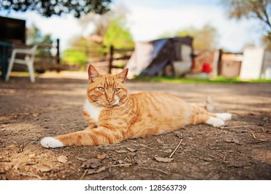 Feral Barn Cat stretched out and relaxing in the shade
