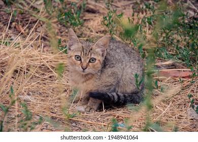 Feral cat hiding in grass