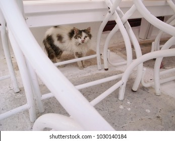 Feral Cat Under White Chairs