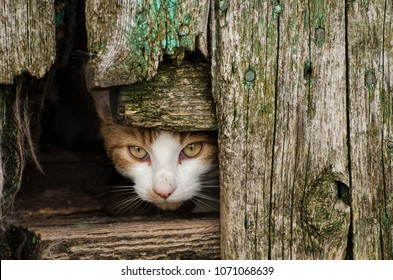 Feral cats live in an abandoned farmhouse