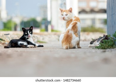 Feral cats resting together. Feral cats often live in colonies, groups of feral cats that live together in one territory, often near food sources and shelter.