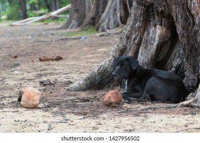 Feral-dog Images, Stock Photos & Vectors | Shutterstock