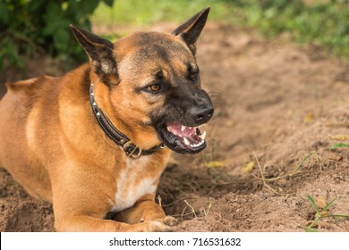 Good Floppy Ears Brown Adorable Dog - feral-dogs-were-snarling-fangs-260nw-716531632  HD_662640  .jpg