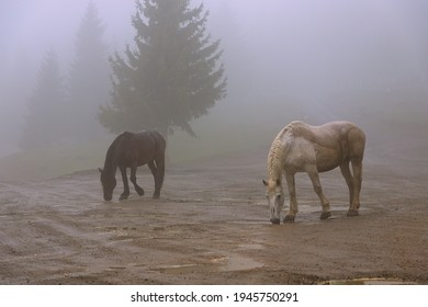 feral horses in a foggy morning; in Apuseni mountains, Transylvania, people let the horses live in the woods for the summer