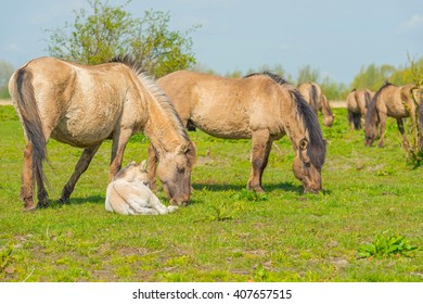 Feral horses in nature in spring