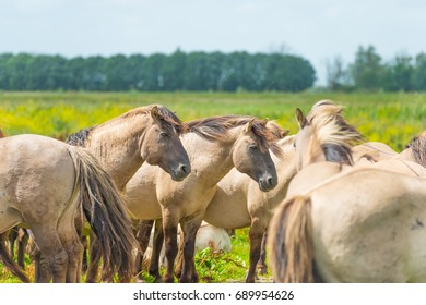 Feral horses in sunlight in a field  in summer