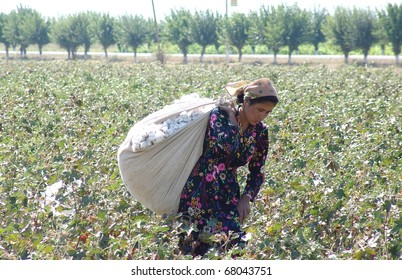 FERGANA, UZBEKISTAN - AUGUST 17: Woman picks cotton on August 17, 2010 in Fergana, Uzbekistan. The industry has come under international pressure for its environmental impact and human rights abuses.
