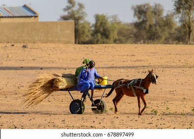 FERLO DESERT, SENEGAL - APR 25, 2017: Unidentified Fulani man rides a cart with a horse in the field . Fulanis (Peul) are the largest tribe in West African savannahs