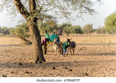 FERLO DESERT, SENEGAL - APR 25, 2017: Unidentified Fulani boy rides on cart with donkeys along the village. Fulanis (Peul) are the largest tribe in West African savannahs