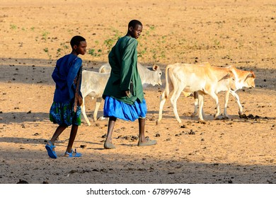 FERLO DESERT, SENEGAL - APR 25, 2017: Unidentified Fulani boys in colored clothes graze cows. Fulanis (Peul) are the largest tribe in West African savannahs