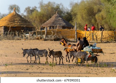 FERLO DESERT, SENEGAL - APR 25, 2017: Unidentified Fulani man rides a cart with a horse in the village . Fulanis (Peul) are the largest tribe in West African savannahs