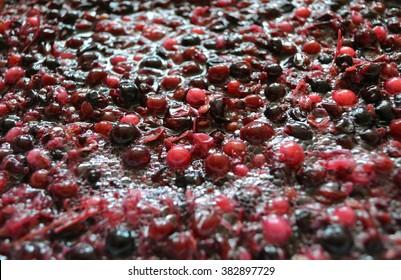 Fermentation des Zellstoffs aus Weinbeeren